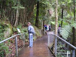 You can walk along this rainforest walkway and read about the different plans and animals., Christine C - July 2008