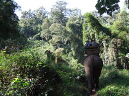 Elephant trek through jungle , Del - January 2011
