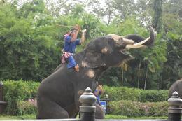 What the elephant show, Bangkok, Shelley C - November 2009