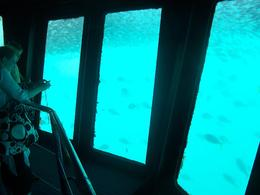 Photo of The Whitsundays & Hamilton Island Great Barrier Reef Day Cruise to Reefworld Underwater Room