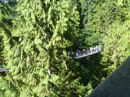 View from top section of the suspension bridge. , Lynda G - August 2015