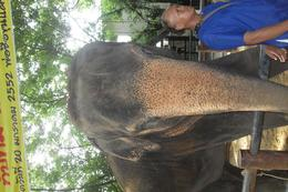 Foto de Bangcoc Sampran Elephant Ground and Zoo Tour from Bangkok Elephant