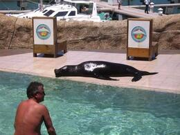 Photo of Puerto Plata Sea Lion Encounter at Ocean World Taking a rest