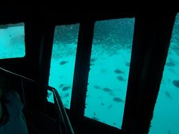 Photo of The Whitsundays & Hamilton Island Great Barrier Reef Day Cruise to Reefworld Underwater Room and Fish