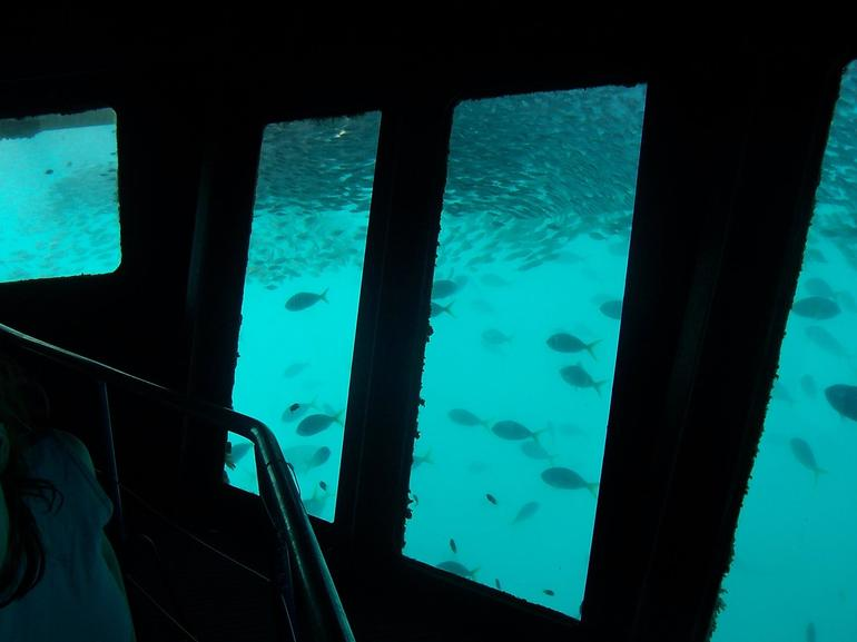 Underwater Room and Fish - The Whitsundays & Hamilton Island