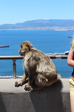 Photo of Malaga Gibraltar Sightseeing Day Trip from Malaga Here is the monkey we saw on the side of the road.