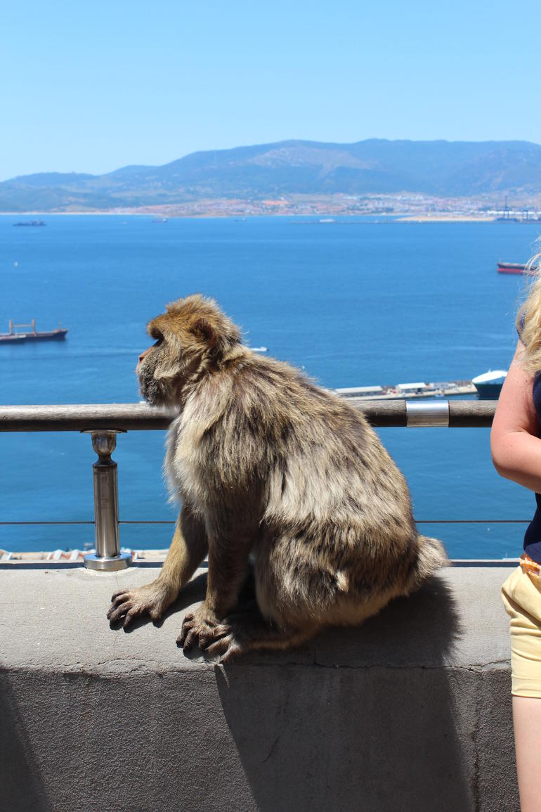 Here is the monkey we saw on the side of the road. - Malaga