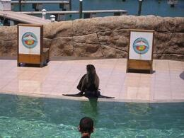 Photo of Puerto Plata Sea Lion Encounter at Ocean World Sea Lion Encounter