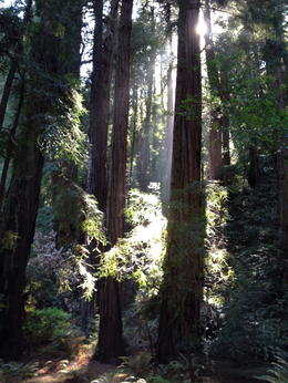 Walking though the Muir Woods on a beautiful day in September. , elnlewis001 - October 2014