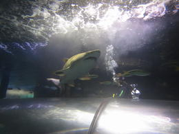 Bradleys 1st scuba diving experience and close encounter with sharks. , Debra D - October 2014