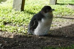Photo of Melbourne Phillip Island Penguin Small Group Eco Tour from Melbourne Under the Boardwalk