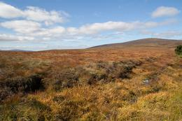 Photo of Dublin Wild Wicklow Tour including Glendalough from Dublin Wild Wicklow Tour including Glendalough from Dublin