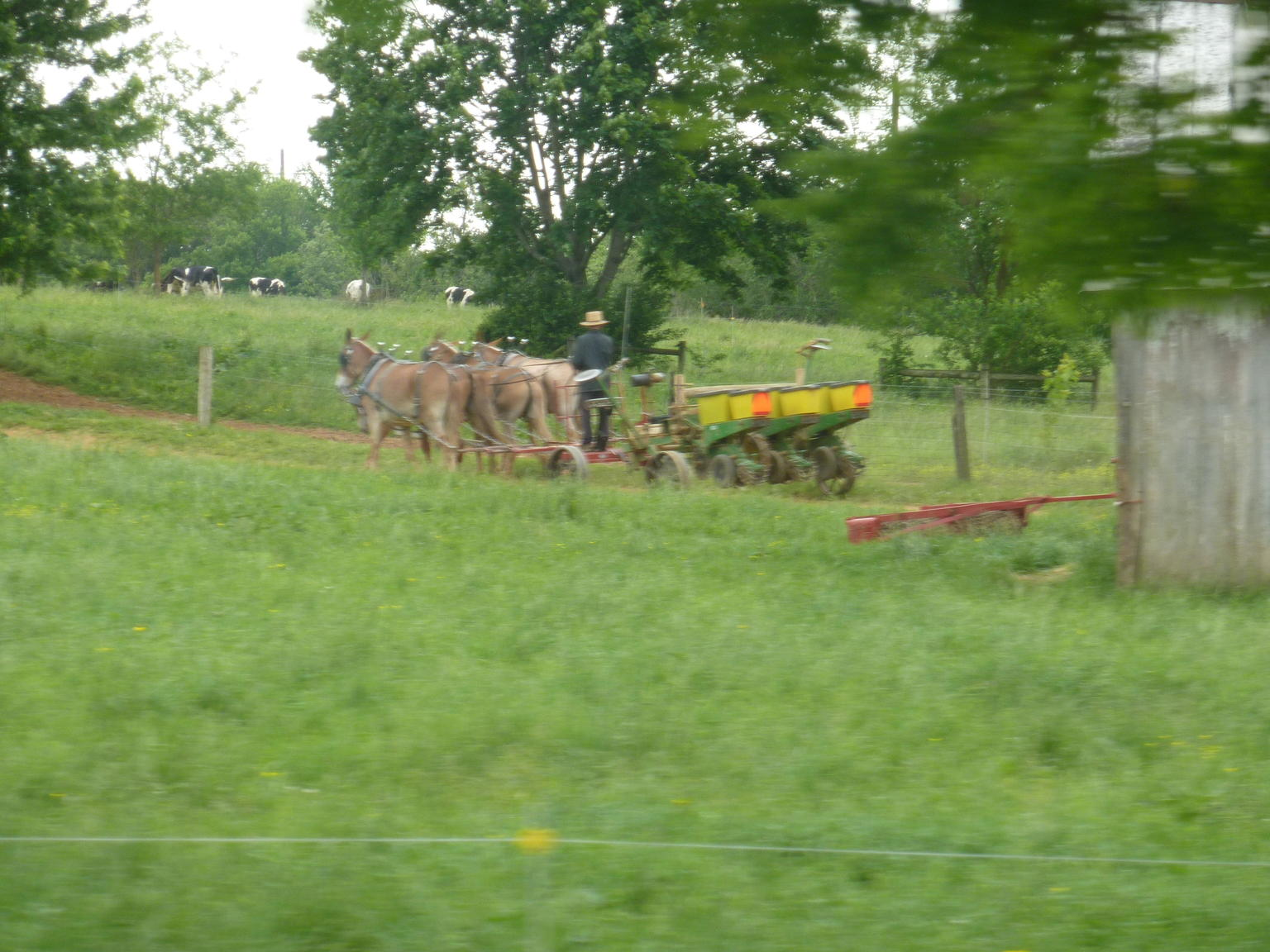 Philadelphia and Amish Country Day Trip from New York City
