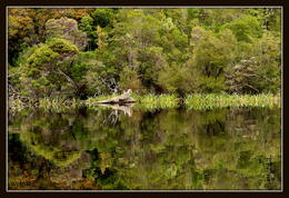 Photo of Tasmania Gordon River Cruise from Strahan Gordon River