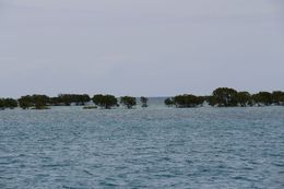 View of a line of mangroves from the boat , Joyce F - November 2015