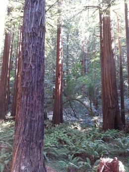 Photo of San Francisco Muir Woods, Giant Redwoods and Sausalito Half-Day Trip Serene Muir Woods