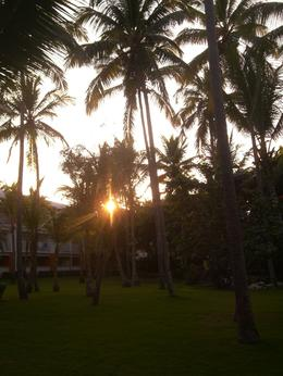 Photo of Punta Cana Shared Round-Trip Transfer: Punta Cana International Airport Hotel garden sunset