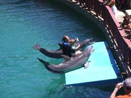 The Dolphin Show - June 2008