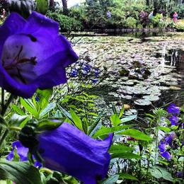 Photo of Paris Versailles and Giverny Day Trip Giverny