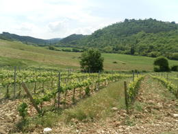 Photo of Florence Horse Riding in Chianti Day Trip from Florence Vineyard
