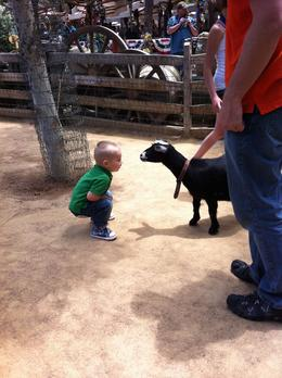 Photo of   Big Thunder Ranch Petting Zoo
