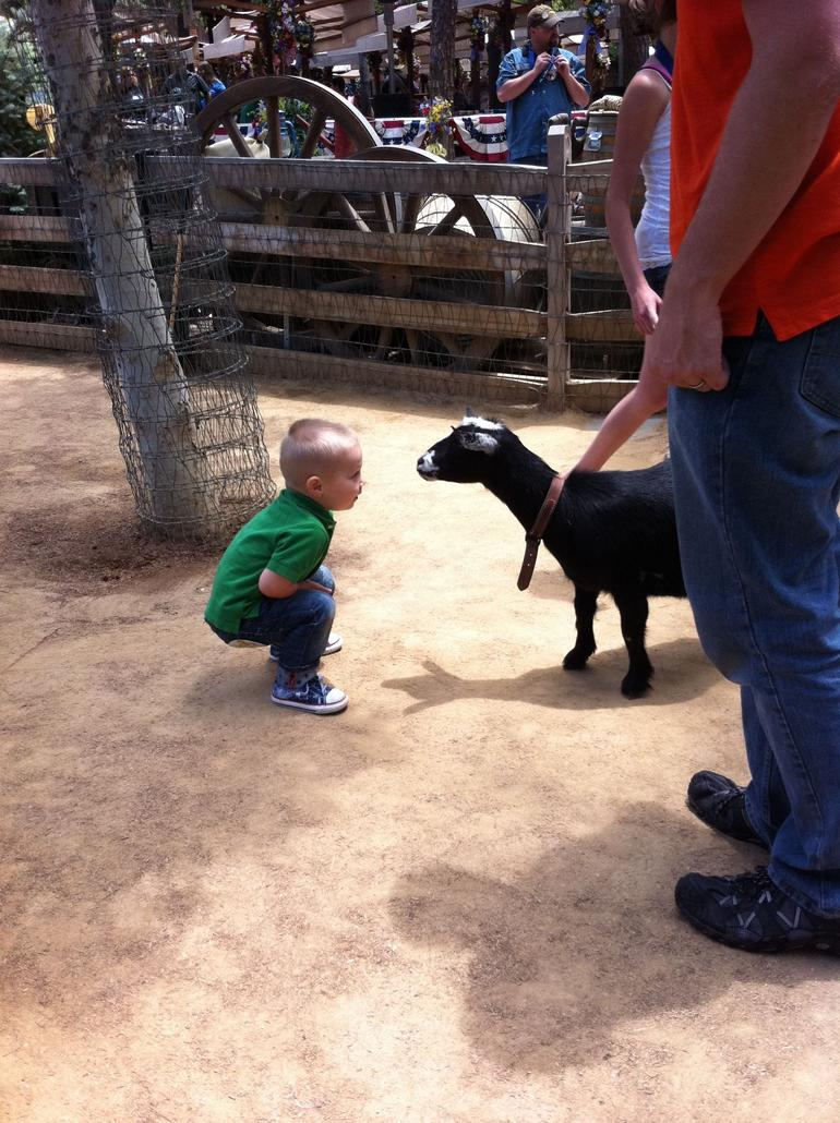 Big Thunder Ranch Petting Zoo - Los Angeles