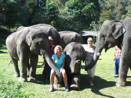 Getting up close and personal with these magnificent beasts! - March 2013