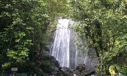 Photo of San Juan El Yunque Rainforest Half-Day Trip from San Juan La Coca Falls