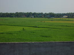 Photo of Ho Chi Minh City Mekong Delta Discovery Small Group Adventure Tour from Ho Chi Minh City Lush Rice Fields