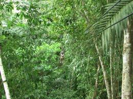 Photo of Montego Bay Canopy Tour Zipping through the treeline