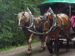 The horse drawn wagons operate privately. It costs 3 each way. One buys a single ticket from the driver of the wagon. One can sit next to the driver or sit in the back of the wagon which has a ... , Jennifer N - August 2015