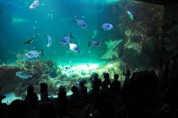Photo of Sydney Skip the Line: SEA LIFE Sydney Aquarium Entrance Ticket Sydney Aquarium