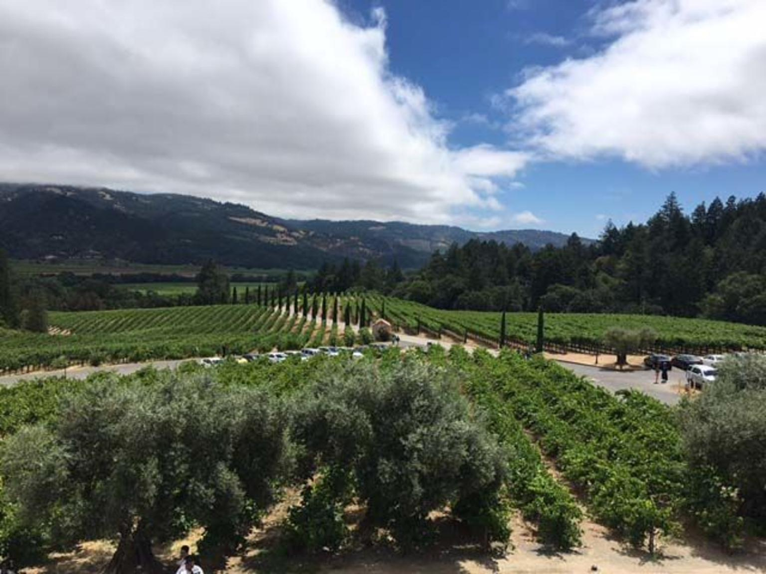 Small-Group Napa Wine Tour With Castello di Amorosa and Lunch