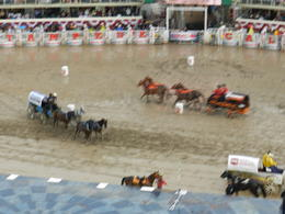 Photo of Calgary The Calgary Stampede Chuckwagon racing