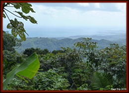 Photo of San Juan El Yunque Rainforest Half-Day Trip from San Juan From the top of the observation tower.