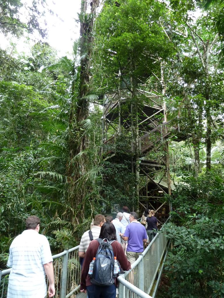 Rainforest walk, Aboriginal Cultural tour of the Daintree - Port Douglas