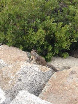 Photo of San Francisco 2-Day Yosemite National Park Tour from San Francisco A friendly squirrel in Yosemite
