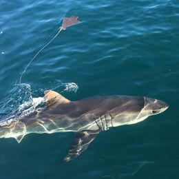 we saw so many sharks it was hard to keep count! , Nicole L - June 2016