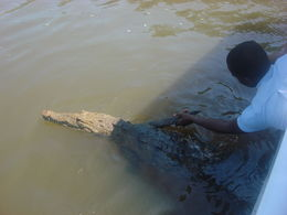 Guide shaking hands with croc , Boosky's0416 - April 2016