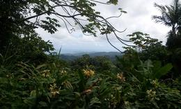 Photo of San Juan El Yunque Rainforest Half-Day Trip from San Juan View to the Atlantic