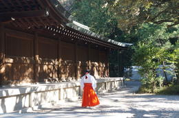 Photo of Tokyo Panoramic Tokyo Day Tour - Meiji Shrine, Asakusa Temple and Tokyo Bay Cruise At the Meiji Shrine