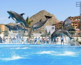 Photo of Los Cabos Swim with the Dolphins in Cabo San Lucas Dolphins