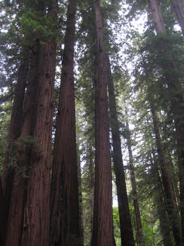 John Muir Woods , Michael W - September 2011