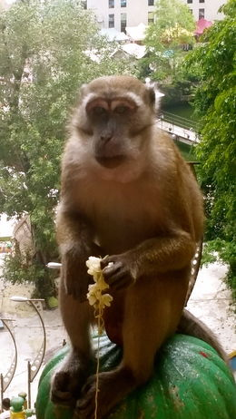 A monkey stopped someone in our group, because she was taking a rolaid. He thought it was food for him!! Loved this! , Crystal K - June 2015