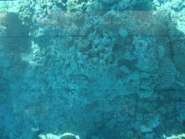 Photo of Sharm el Sheikh Glass Bottom Boat Cruise and Coral Reef Viewing CORAL OF RED SEA
