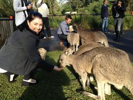 Photo of Sydney Hunter Valley Wineries and Wilderness Small-Group Tour Feeding a kangaroo - the highlight of the tour!