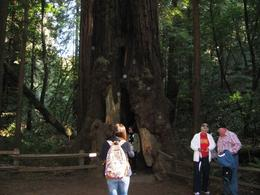 People standing inside a Redwood tree in Muir Woods , Bob - March 2013