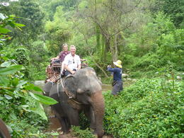 Photo of Bangkok Khao Yai National Park and Elephant Ride Day Trip from Bangkok Khao Yai National Park Tour