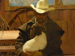 Photo of Las Vegas Wild West Sunset Horseback Ride with Dinner lucy the goat