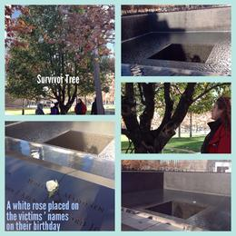 September 11 Memorial - survivor tree, the reflecting pools, our tour guide Heather, white rose , Jess G - December 2014